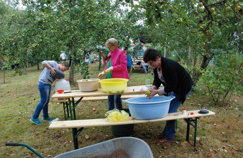 Die frisch gepflückten Äpfel von der OGV-Obstwiese wurden für die Presse vorbereitet von Sebastian und Sylvia und Petra Harth